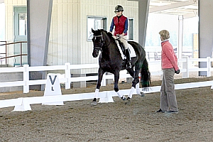 Dressage Clinics with Dottie Morkis